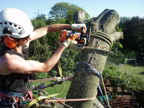 AndyGardener_treecaring_591x443px