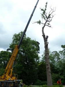 treesurgeons4large