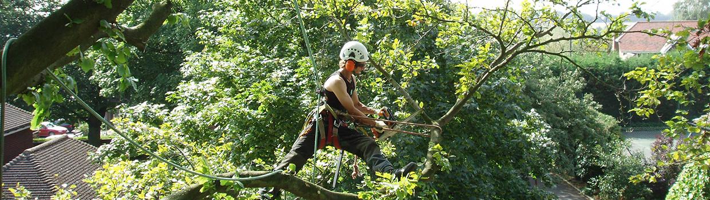 tree-work1
