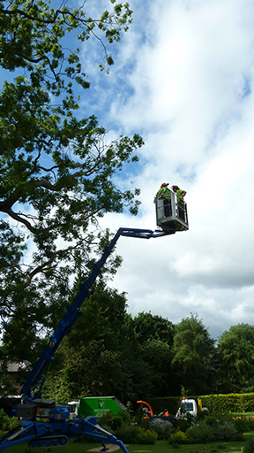 tree-work4